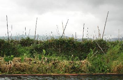 미얀마의 농림수산업