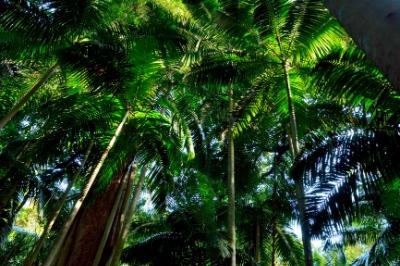 곤드와나 열대우림