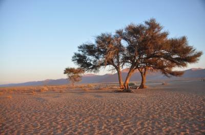나미브 모래바다