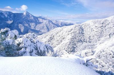 세쿠아 국유림의 겨울풍경 01
