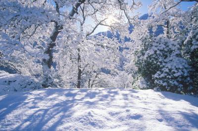 세쿠아 국유림의 겨울풍경 03
