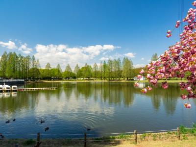가와고에수상공원, 연못 03