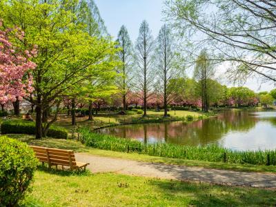 가와고에수상공원, 연못 06