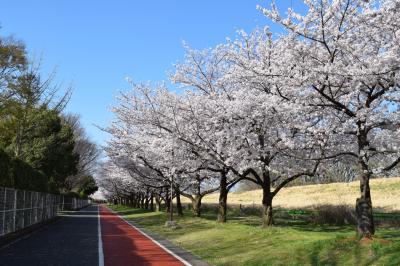 가와고에수상공원, 산책로 03