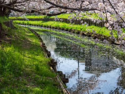 신가시가와의 봄 풍경 04