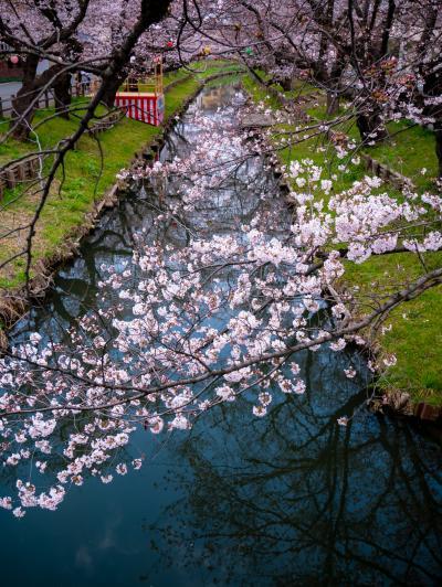 신가시가와의 봄 풍경 09