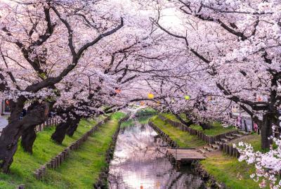 신가시가와의 봄 풍경 01