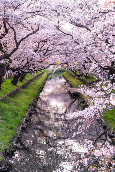 신가시가와의 봄 풍경 10