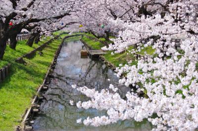 신가시가와의 봄 풍경 05