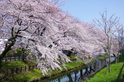 신가시가와의 봄 풍경 02