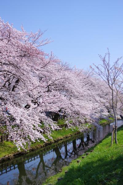 신가시가와의 봄 풍경 11