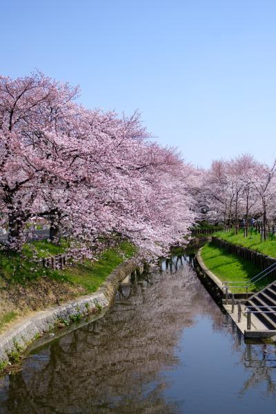 신가시가와의 봄 풍경 12
