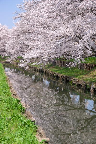 신가시가와의 봄 풍경 14