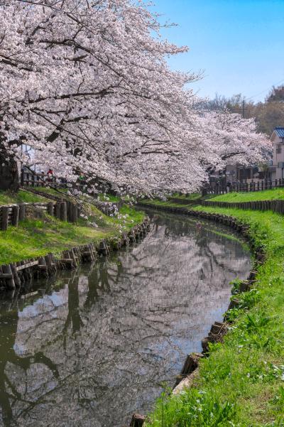 신가시가와의 봄 풍경 15