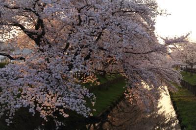 신가시가와의 봄 풍경 08