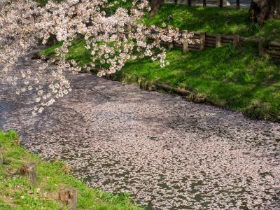신가시가와의 봄 풍경 06