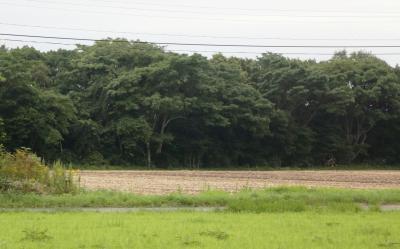 신 치토세공항-신 삿보로역 JR철도 03