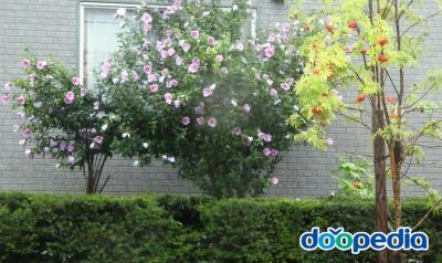 주택 정원
