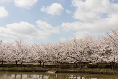 고다이하스노사토의 봄 풍경
