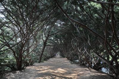 벽초지문화수목원 숲길 10