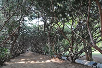 벽초지문화수목원 숲길 11