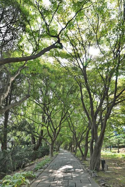 벽초지문화수목원 숲길 13