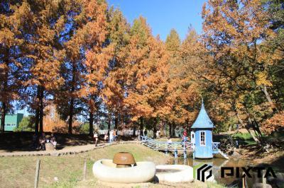 아케보노 어린이 숲 공원의 가을 풍경