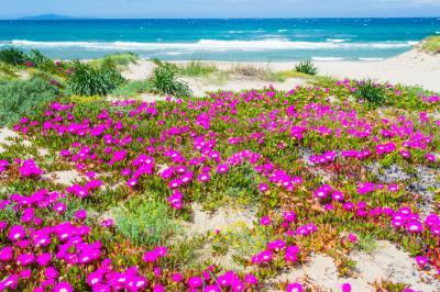 플라타모나 해변 식물