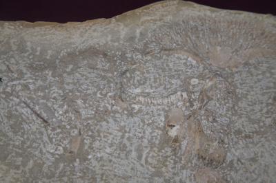 가오리화석 02