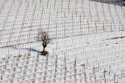 세라룽가 달바 겨울 파노라마 풍경  04