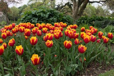 로스 공원 꽃