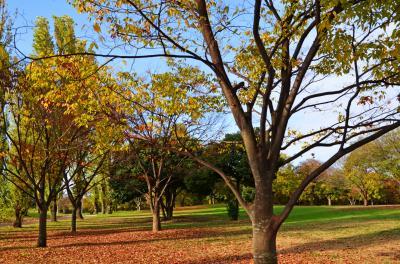 하나하쿠기념공원츠루미녹지, 잔디 광장 가을 풍경 02