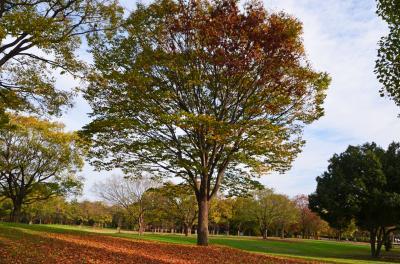 하나하쿠기념공원츠루미녹지, 잔디 광장 가을 풍경 03