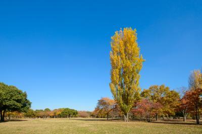 하나하쿠기념공원츠루미녹지, 잔디 광장 가을 풍경 01