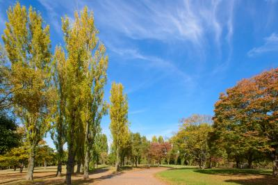 하나하쿠기념공원츠루미녹지, 가을 02