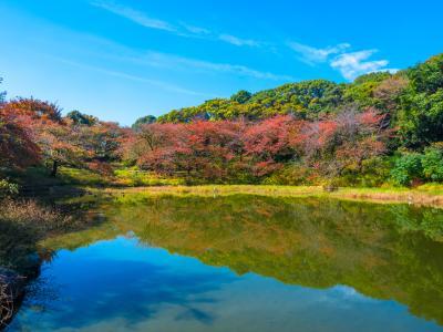 하나하쿠기념공원츠루미녹지, 가을 04