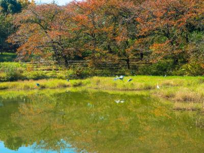 하나하쿠기념공원츠루미녹지, 가을 05