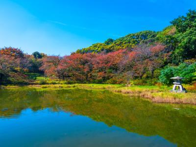 하나하쿠기념공원츠루미녹지, 가을 08
