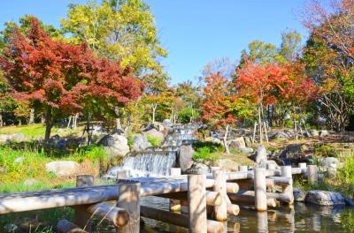하나하쿠기념공원츠루미녹지, 가을 10