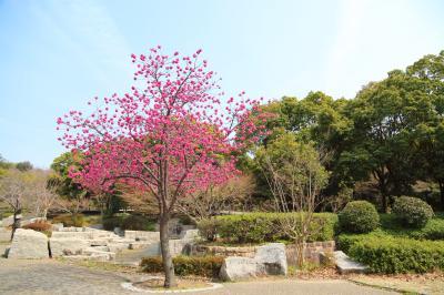 하나하쿠기념공원츠루미녹지, 봄 04