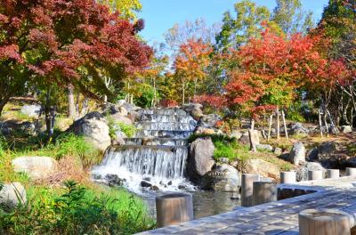 하나하쿠기념공원츠루미녹지, 가을 12