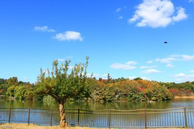 하나하쿠기념공원츠루미녹지, 가을 13