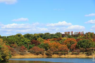 하나하쿠기념공원츠루미녹지, 가을 14