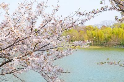 하나하쿠기념공원츠루미녹지, 봄 05