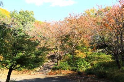 하나하쿠기념공원츠루미녹지, 가을 15