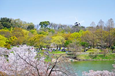 하나하쿠기념공원츠루미녹지, 봄 06