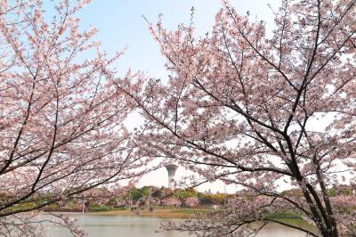 하나하쿠기념공원츠루미녹지, 봄 07