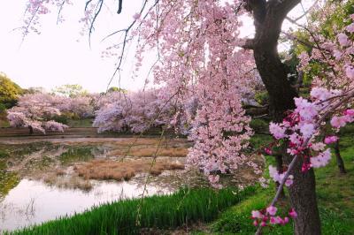 하나하쿠기념공원츠루미녹지, 봄 08