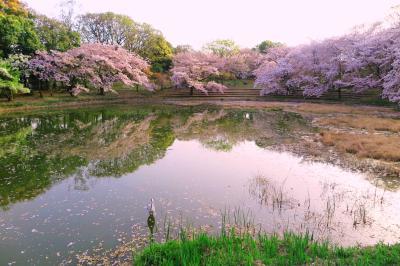 하나하쿠기념공원츠루미녹지, 봄 03