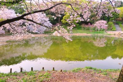 하나하쿠기념공원츠루미녹지, 봄 09